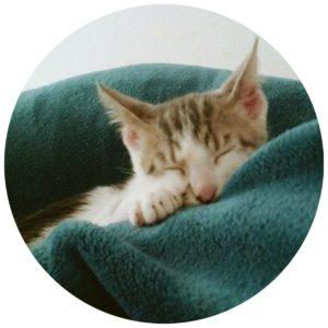 #Acessibilidade Uma foto de Chico dormindo em cobertas. Ateliê Quartzo - Tarot, Terapias Holísticas e Reiki em Porto Alegre.