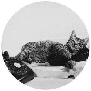 #Acessibilidade Foto em preto branco de um gato deitado sob um telefone antigo e um catálogo telefônico aberto. Ateliê Quartzo - Tarot, Terapias Holísticas e Reiki em Porto Alegre.
