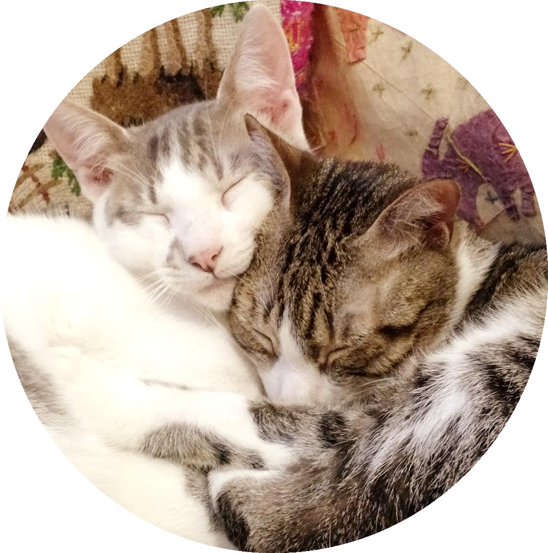 #Acessibilidade Chico e Frits dormindo abraçados. Ateliê Quartzo - Tarot, Terapias Holísticas e Reiki em Porto Alegre.