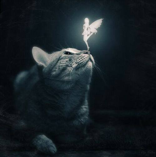 #Acessibilidade Imagem de um gato, no escuro, com uma fada branca brilhante em seu nariz