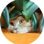 #Acessibilidade foto de um gato escondendo-se em folhas verdes