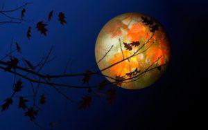 Imagem de uma Lua Cheia atrás de galhos de uma árvore que perdeu suas folhas