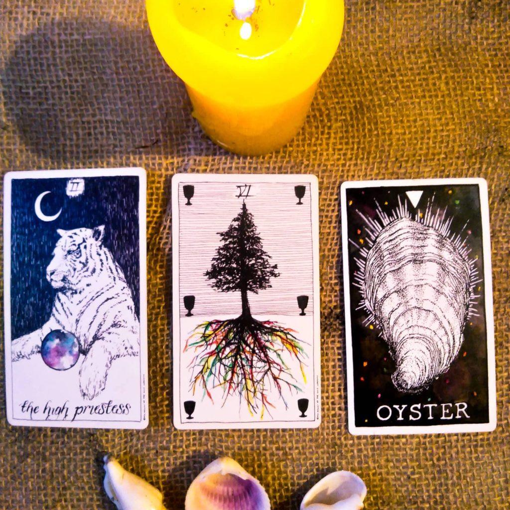 Cartas de Março: A Sacerdotisa e o Seis de Copas do Wild Uknown Tarot e a Ostra do Wild Uknown Spirt Animal Deck