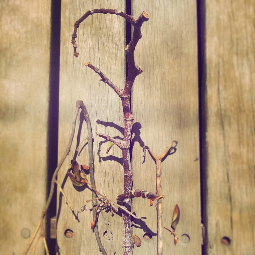 Foto de galhos secos em um deck de madeira
